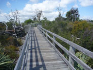 Wooden boardwalk over DuPuis Wildlife and Environmental Area.