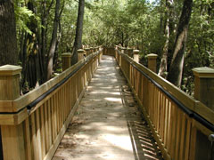 View of boardwalk through trees.